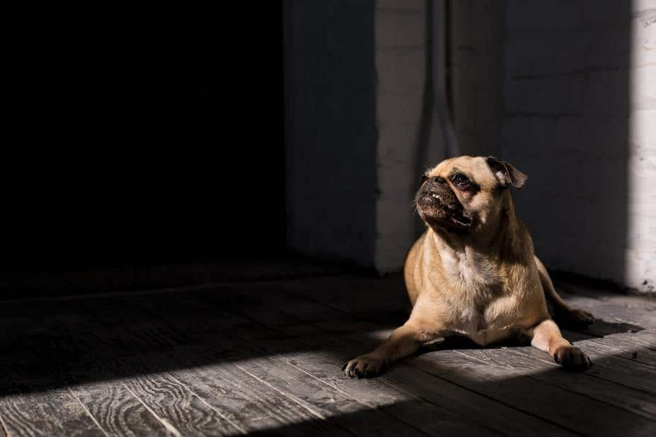 dog in the sun photo by Matthew Henry